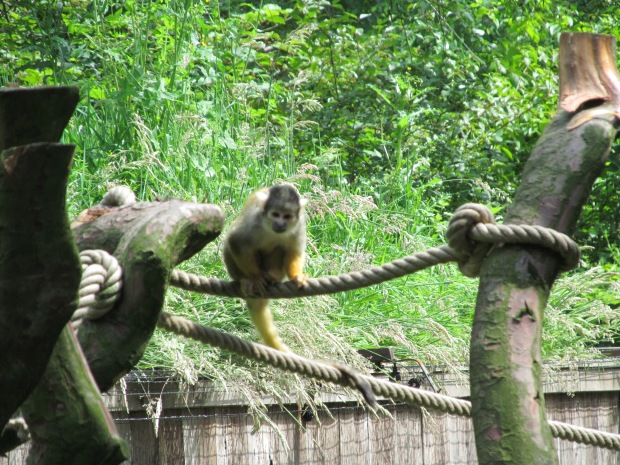 monkeysarcen